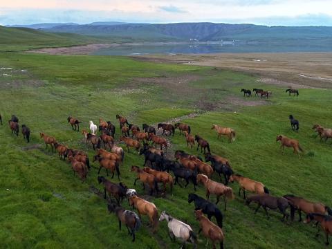 具二千年历史的山丹军马场。
